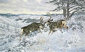 """Michael Sieve Limited Edition Print: """"Battling Bucks - Mule Deer"""""""