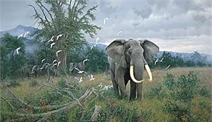 "Michael Sieve Limited Edition Print: ""Highland Bull -Elephant"""