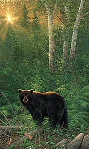 "Michael Sieve Limited Edition Print: ""Sunset Surprise - Black Bear"""