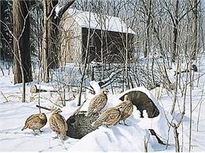 "David Maas Limited Edition Print: ""Winter Shelter - Bob White"""