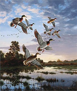 "David Maas Limited Edition Print: ""Evening Flight - Mallards"""