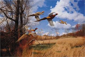 "David A. Maass Limited Edition Print: ""Tomahawk Trail-Pheasant """