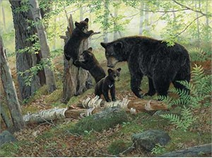 "Persis Clayton Weirs Handsigned & Numbered Limited Edition Print:""Playtime-Black Bears"""