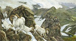 "Ron Van Gilder Limited Edition Print:""The High Life - Dall Sheep"""