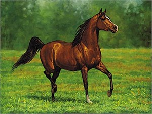 "Chris Cummings Signature Edition Print:""That's My Horse- Arabian Bay """