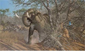 "Michael Sieve  Hand Signed and Numbered Limited Edition Canvas Giclee:""Rolling Thunder-Elephant"""