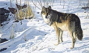 "Jim Hautman Limited Edition Print:""Lone Wolf"""