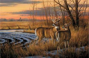 "Rosemary Millette Limited Edition Artist Proof Print:""Daybreak-Whitetail Deer"""