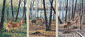 "Jim Kasper Limited Edition Print (set of 3):""Seasons of the Wood Set """