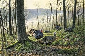 "Jim Kasper Limited Edition Print:""Spring Fever-Turkeys """