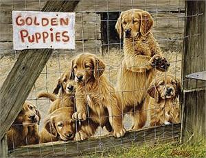 """Jim Killen Edition Print:""""Golden Daze- Golden Retriever"""""""