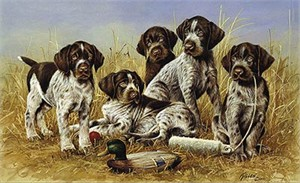 "Jim Killen Edition Print: ""Great Hunting - Drahtaar Puppies"""