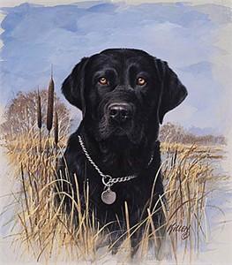 "Jim Killen Open Edition Print:""That My Dog - Lab """