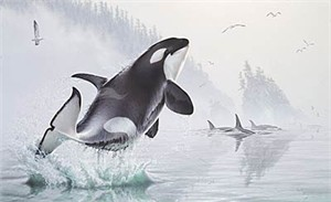 "Lee Kromschroeder Limited Edition Print:"" Teeming Waters-Orcas """