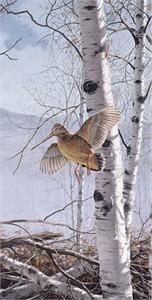 "David Maass Limited Edition Print:""Climbing High-Woodcock"""