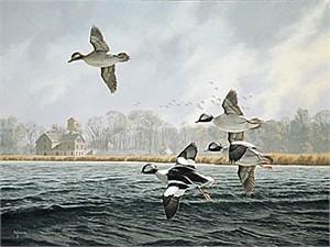 "David Maass Limited Edition Print:""Lake Minnetonka-Buffleheads"""