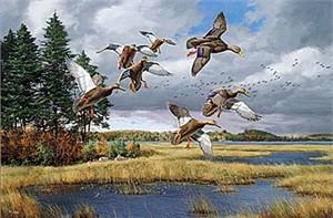 "David Maass Canvas Limited Edition Print:""Merrymeet Bay-Black Duck"""