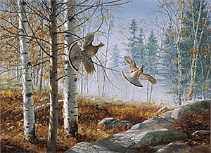 """David Maass Limited Edition Print:""""A Morning Double-Ruffed Grouse"""""""