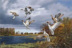 "David Maass Canvas Limited Edition Print:""Rapid Ascent-Pintails"""