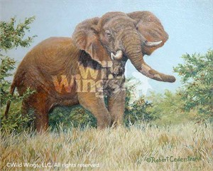 "Robert Cederstrand Original Oil Painting:""Elephant Study"""