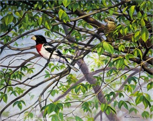 "Marc Hanson Original Oil Painting:""Rose-breasted Grosbeak"""