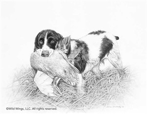 "Karen Olsen Original Pencil Drawing:""Good Hunt-Springer Spaniel"""
