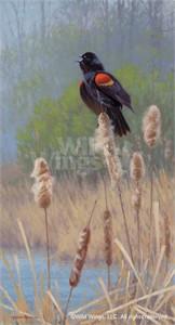 "Jim Rataczak Original Oil Painting:""Wearing His Heart...-Blackbird"""