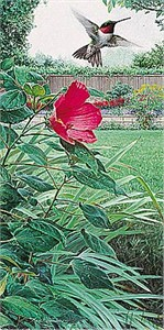 """Marc Hanson Limited Edition Print:""""Hummingbird And Hibiscus"""""""
