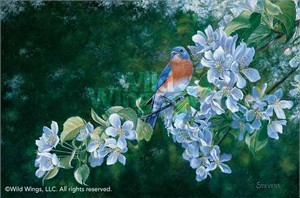 "Gene Stevens Original Oil Painting:""Blossoms of Spring-Bluebird"""