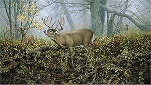 "Ron Van Gilder Limited Edition Print:""Monarch's Morning-Deer"""