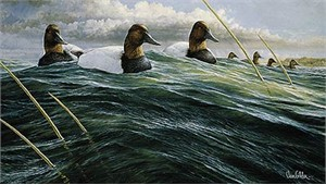 "Ron Van Gilder Limited Edition Print:""Passing Storm-Canvasbacks"""