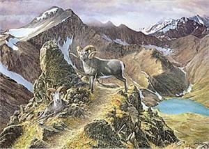 "Ron Van Gilder Limited Edition Print:""The Pinnacle-Ram"""