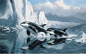 """Persis C. Weirs Limited Edition Print:""""Glacier's Edge-Orcas"""""""