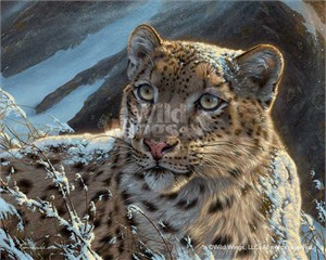 "Lee Kromschroeder Handsigned and Numbered Limited Edition Giclee on Canvas:""Snow on Snow (Snow Leopard) """