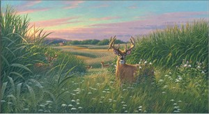 "Michael Sieve Hand Signed and Numbered Limited Edition Canvas Giclee:""Red Velvet – Whitetail Deer"""