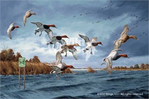 "David Maass Limited Edition Artist Proof Print:""Fruits of Your Labor - Canvasbacks"""