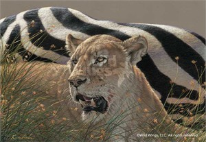 "Lee Kromschroeder Ovation Giclée Canvas:""Ngorongoro Morning – Lioness"""