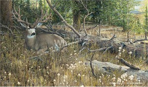 "Ron Van Gilder Limited Edition Premier Giclée Canvas:""Blow Down Buck – Mule Deer"""