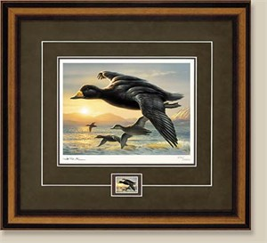 "2002 Federal Duck Stamp Print w/ Mint Stamp:""Black Scooters - Framed Collector Edition"""