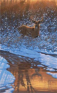 "Michael Sieve Handsigned and Numbered Limited Edition: ""Reflections of Bowhunting-Whitetail Deer"""