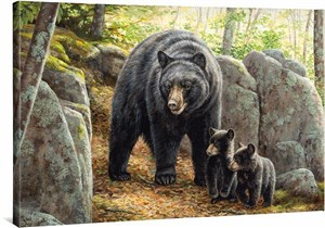 "Rosemary Millette Gallery Wrapped Canvas Giclee:""Northwoods Springtime – Black Bears """