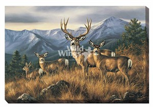 "Rosemary Millette Gallery Wrapped Canvas Giclee:""Crossing the Ridge – Mule Deer """