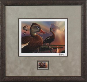 "Federal Duck Stamp Print COLLECTOR'S EDITION 2016-17  Limited Edition by Joe Hautman:""Trumpter Swan"""