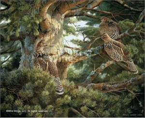 "Persis Clayton Weirs Hand Signed and Numbered Limited Edition Canvas Giclee: ""Sunlit Pine – Ruffed Grouse"""