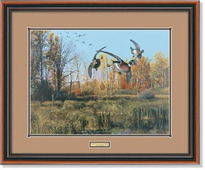 "Scot Storm Handsigned and Numbered Limited Edition: ""Framed Backwater-Wood Ducks Artist Proof"""