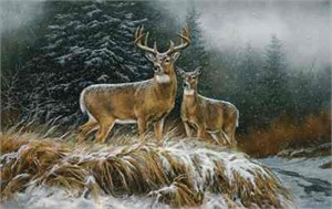 "Rosemary Millette Limited Edition Artist Proof Print: ""In the Storm-Whitetail Deer"""