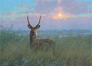 "Michael Sieve Hand Signed & Number Limited Edition Giclee on Canvas:""At Home - Waterbuck """
