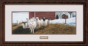 "Steven R. Kozar Handsigned and Numbered Limited Edition: ""Framed Sheep in Winter Morning Light"""
