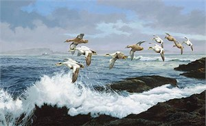 "David Maass Handsigned & Numbered Limited Edition Canvas:""Working the Ledges-Eiders """