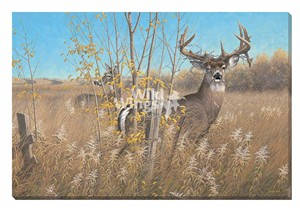 "Michael Sieve Open Edition Gallery Wrap Canvas Giclee:""The Old Warrior – Whitetail Deer """